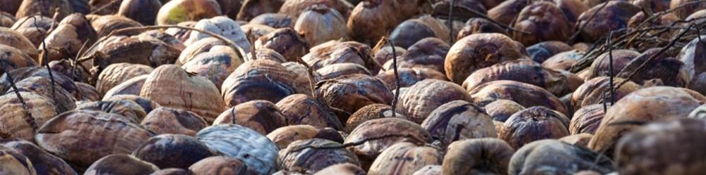 kiriamma kokos producten